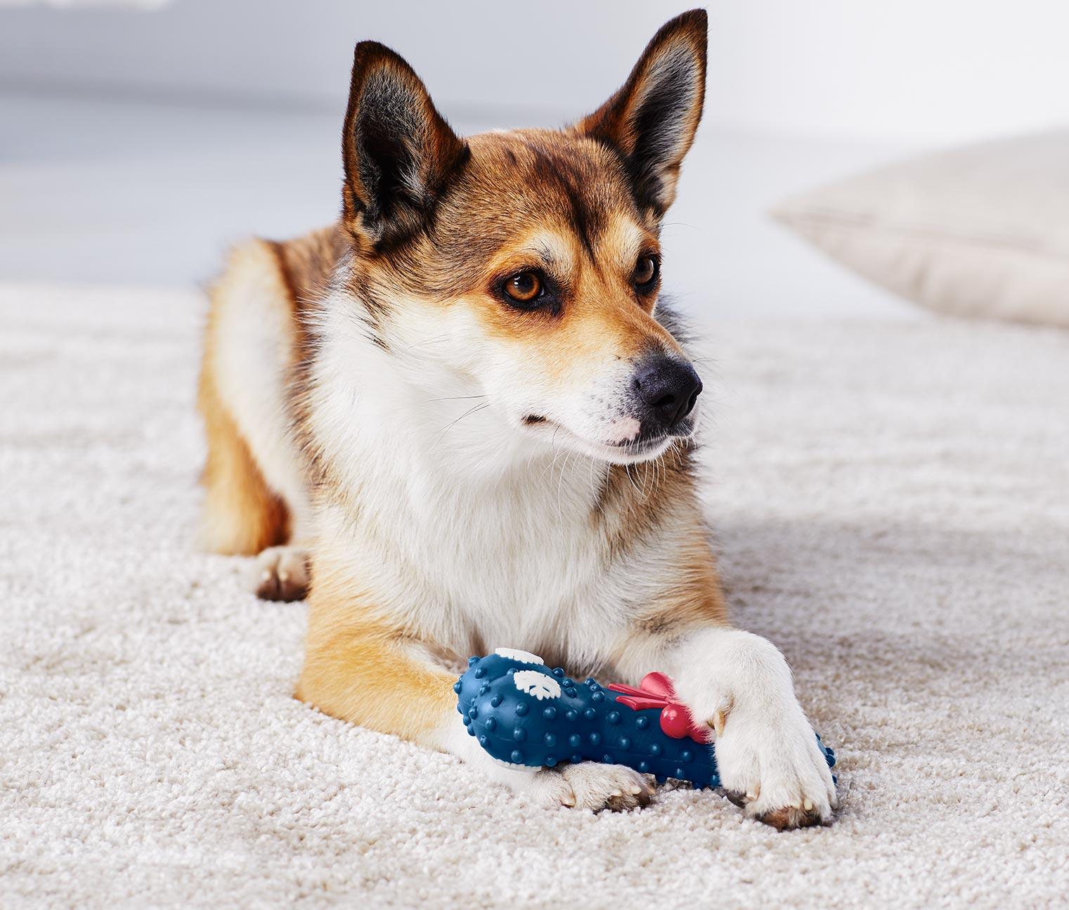 Image of Hunde-Spielzeug, Knochen