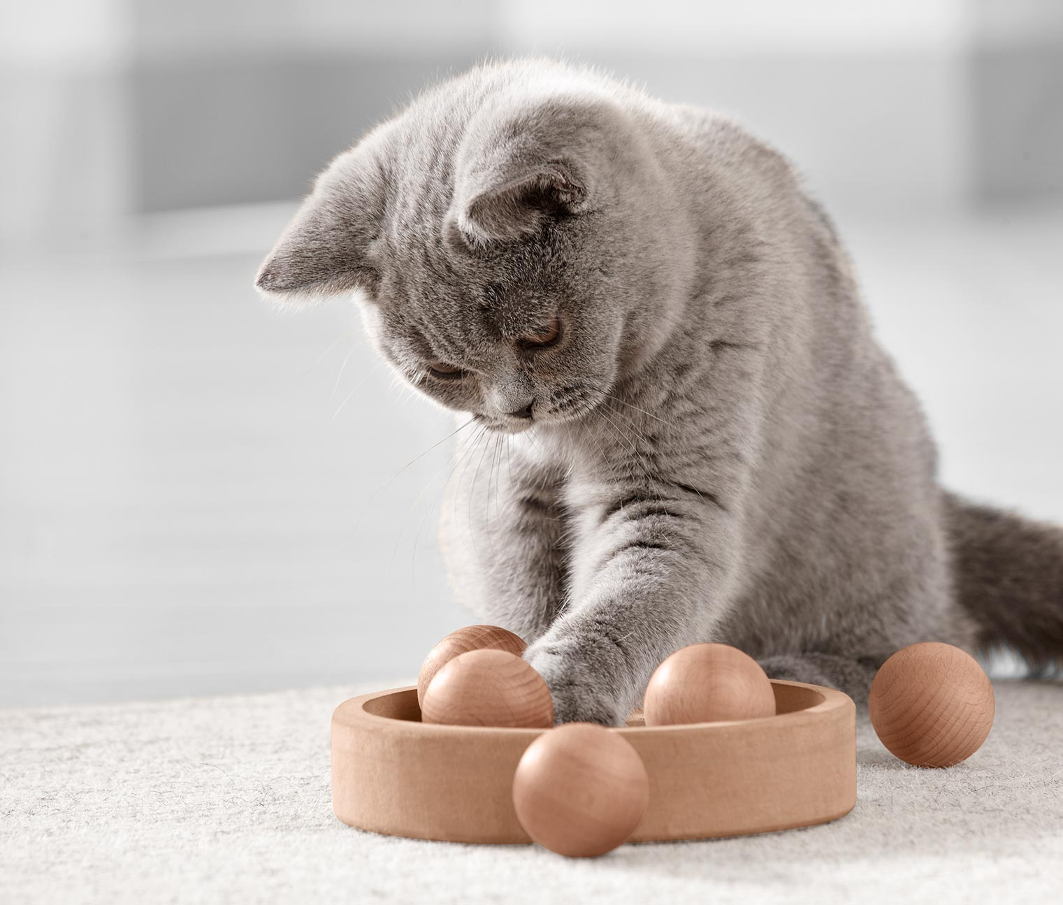 Image of Katzen-Intelligenzspielzeug