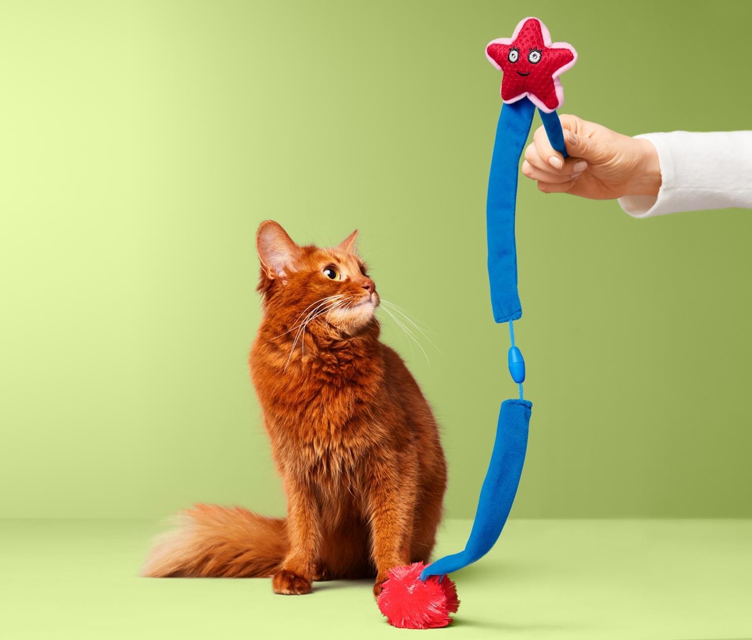 Image of Katzen-Spielzeug